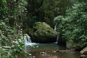 41_cambalache-forest_